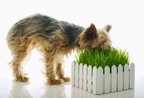 Dog captured by carnivorous grass.