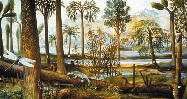 Carboniferous forest with ancient Fern Allies (Stanford University)
