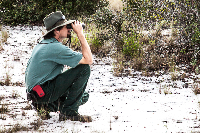 Chris  Vandello, Biologist at the Savannas Preserve State Park, identifying the Jays.