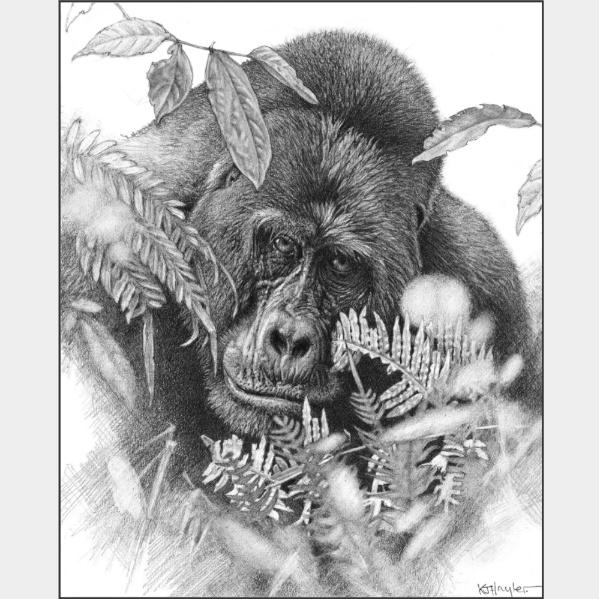 Bracken-loving gorilla by artist Kevin Hayler.   Bracken fern near the gorilla's left cheek.