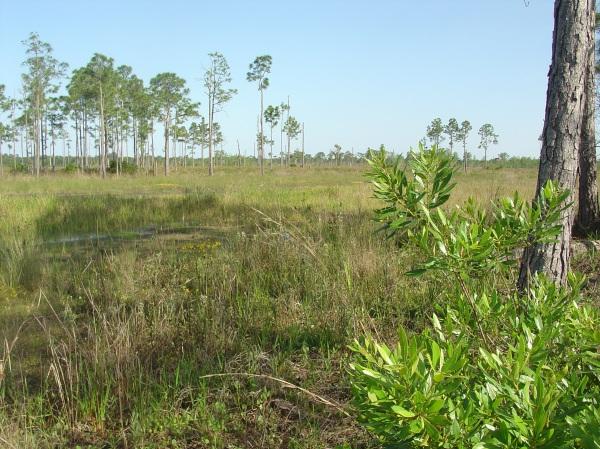 Pine Glades