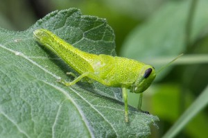 Katydid.  Todays' photos by John Bradford  (except maybe the butterfly.  Forgot who took that picture.)