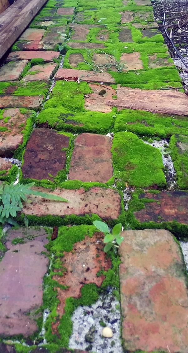 moss samantha humphreys