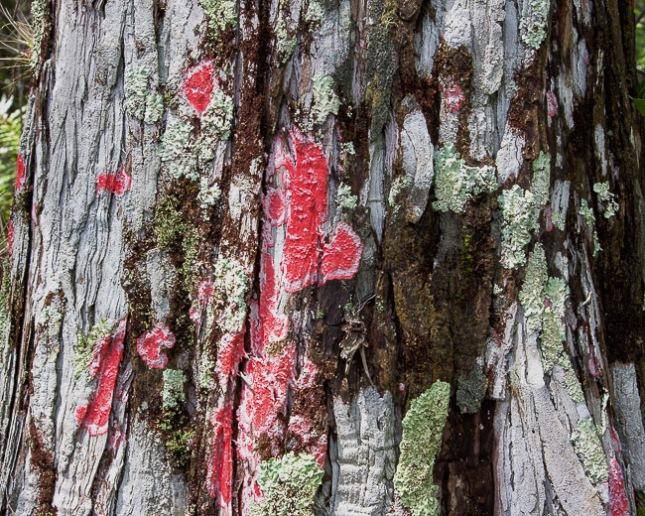 Red Lichen 1