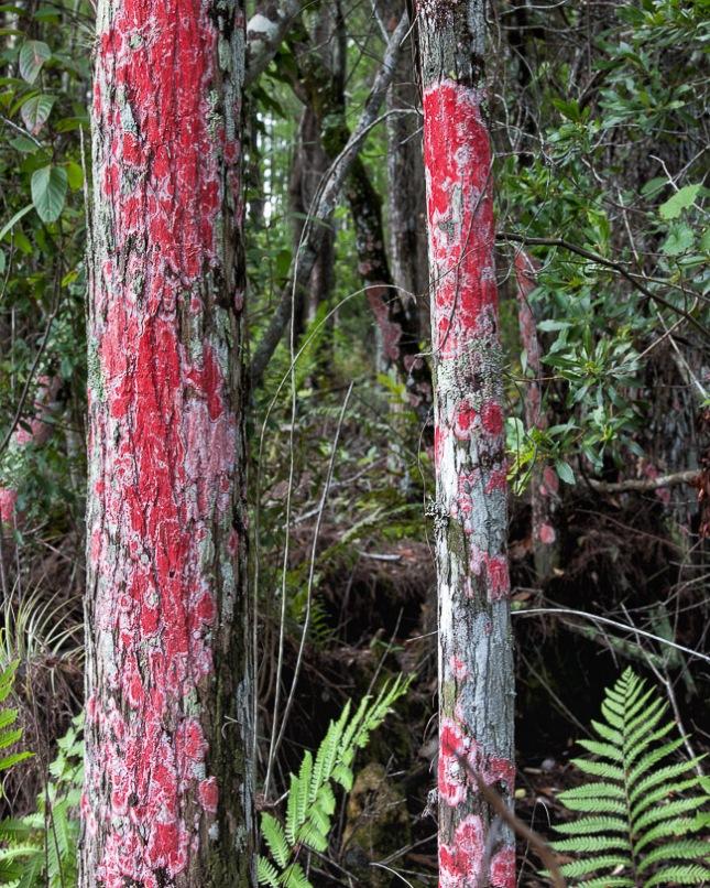 Red Lichen 2