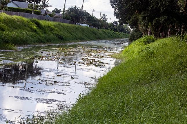 Canal with algae