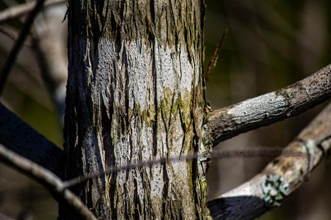 lichen bands