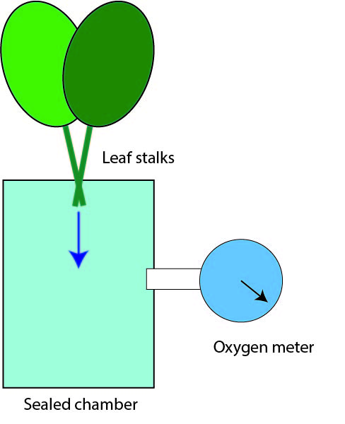leaves in chamber