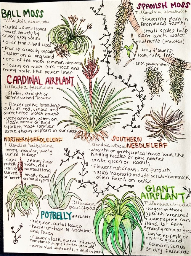 Native Airplants