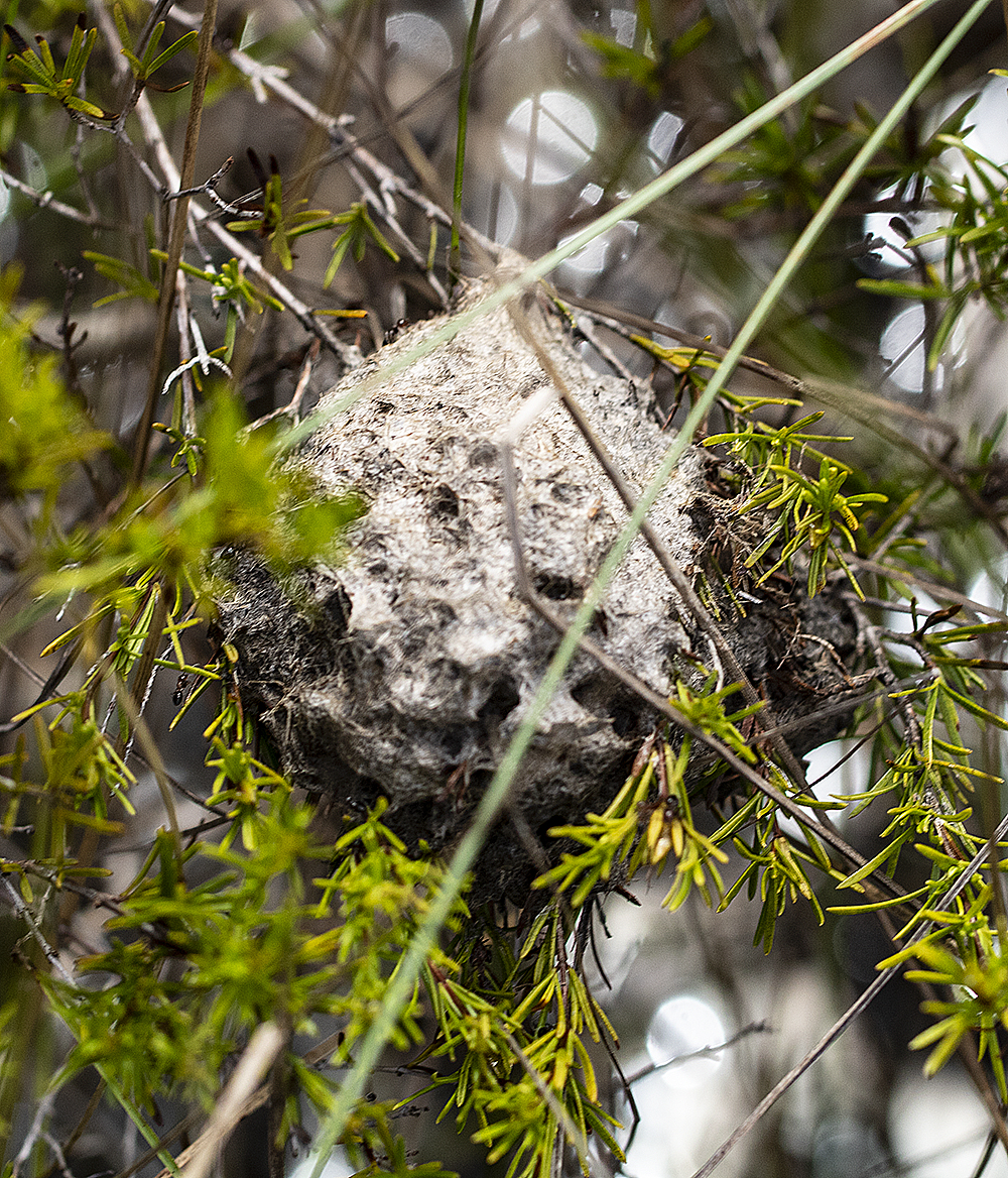 ant nest 2